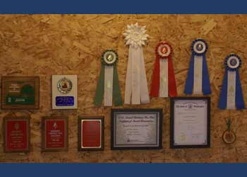 Award Wall for Bear Canyon Tree Farm